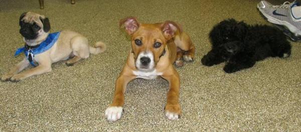 Dog Training In Hurst Tx