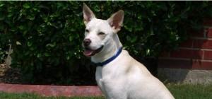 Intermediate Dog Training Classes Fort Worth TX